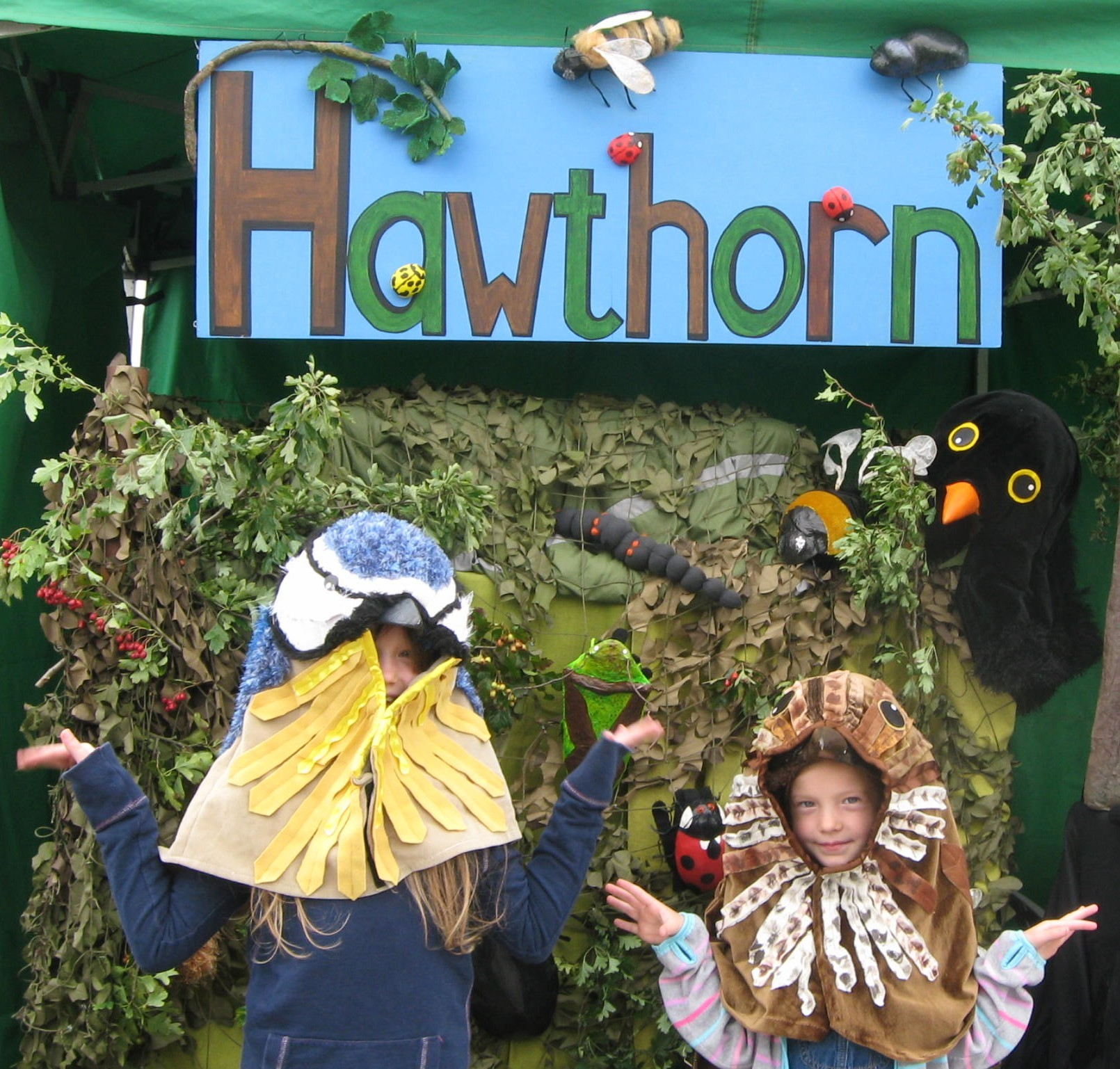 Ludlow Hawthorn Hedge